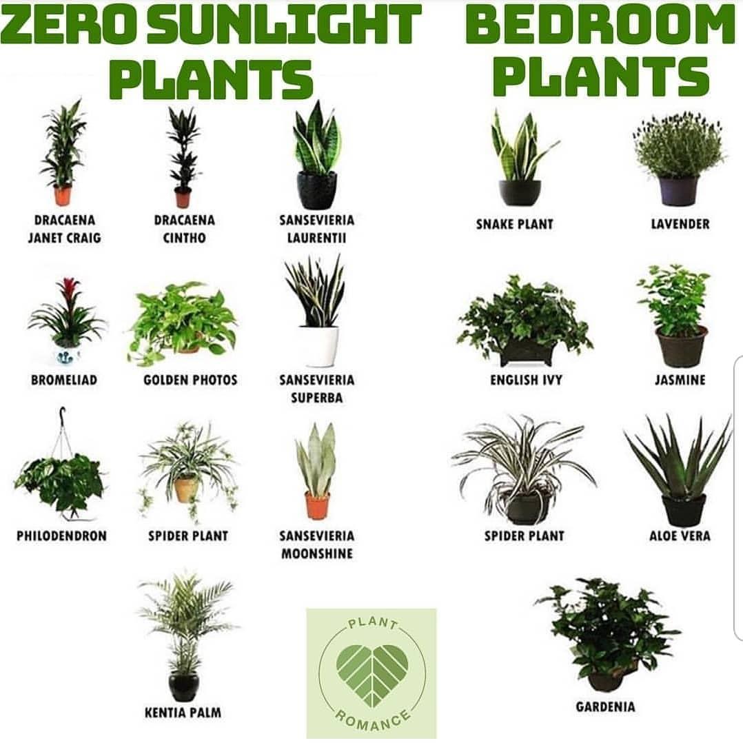 zero sunlight bedroom plants