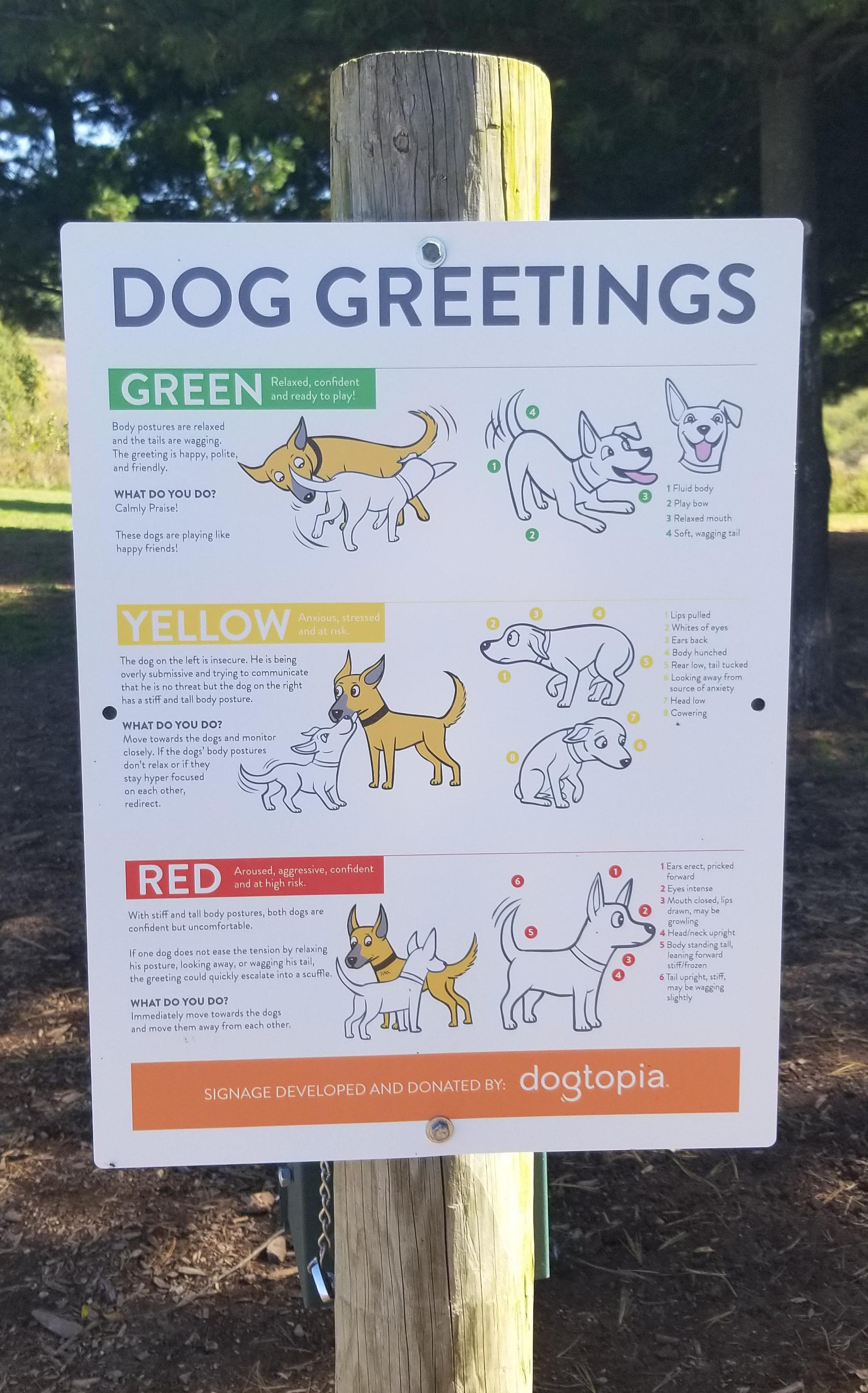 Guide To Dog-To-Dog Greetings