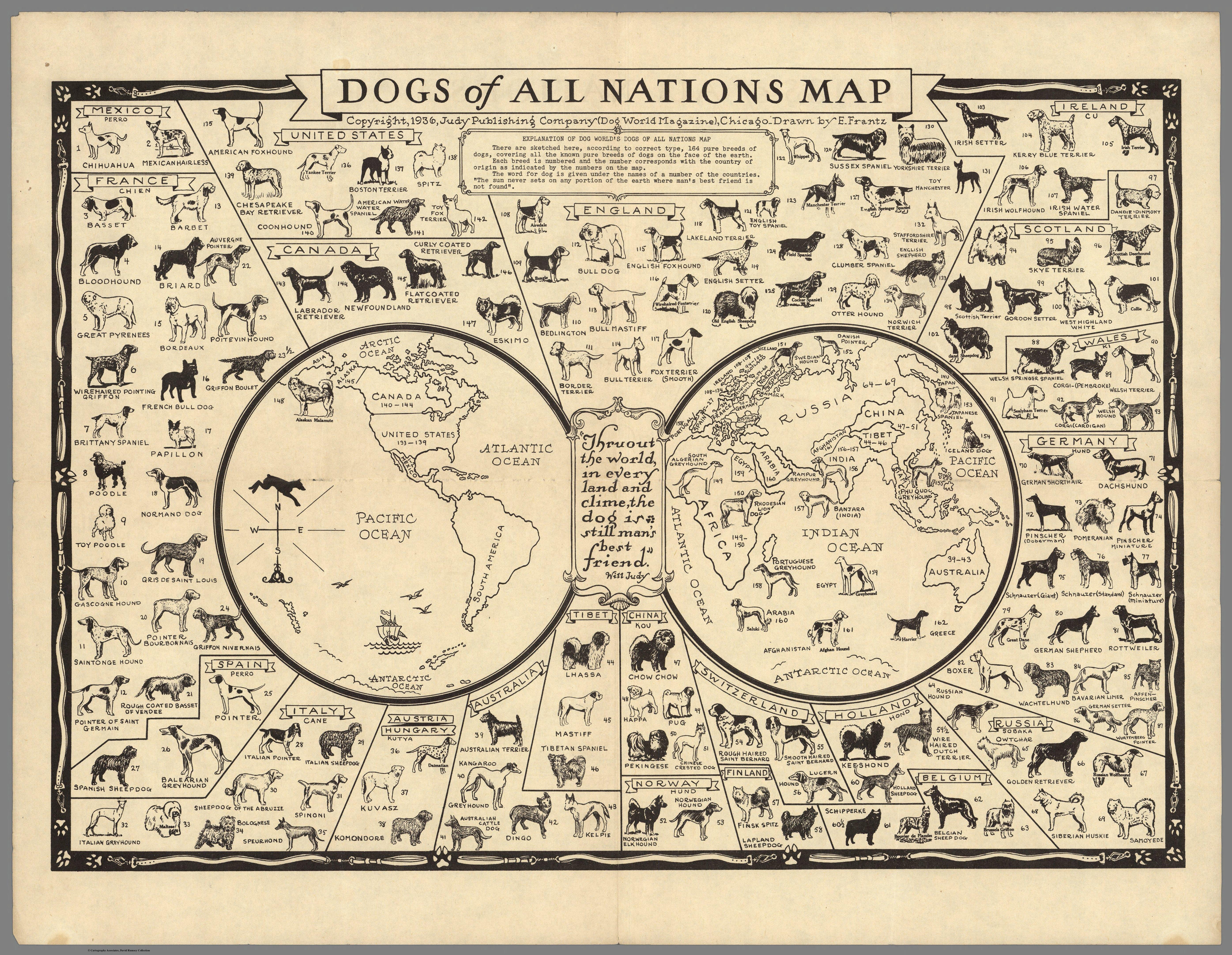 Vintage Infographic Dog Breeds