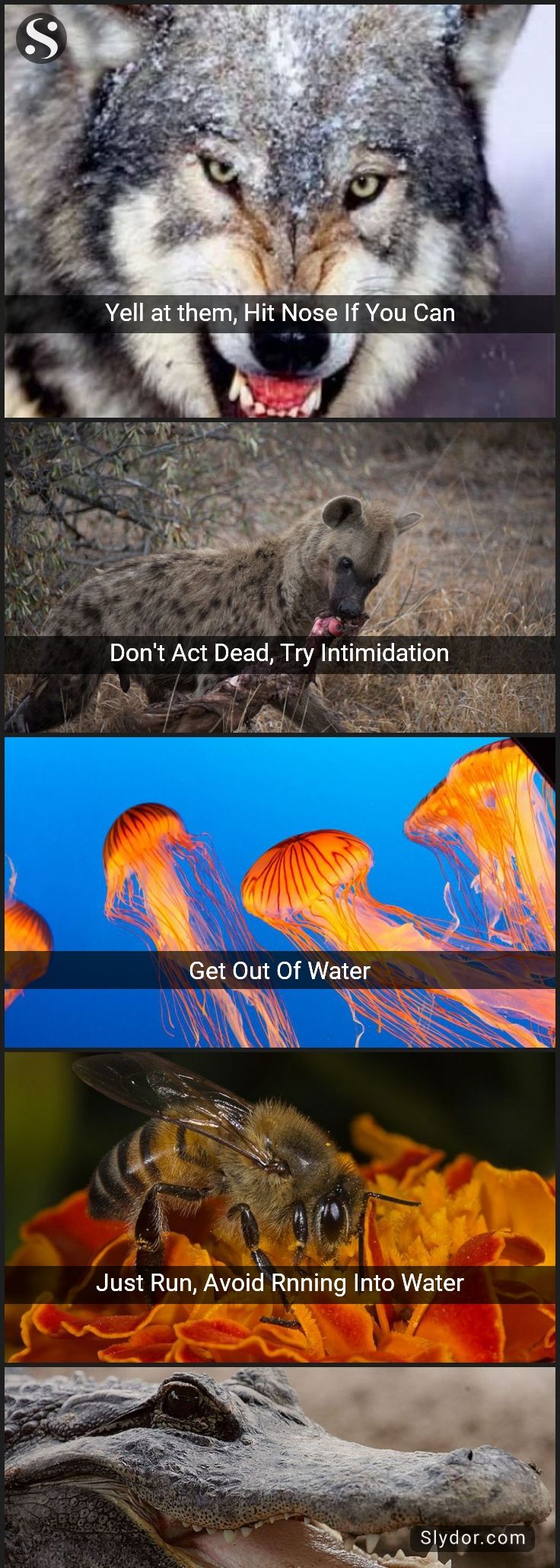 Lifesaving Combat Tips To Survive Wild Animal Attacks