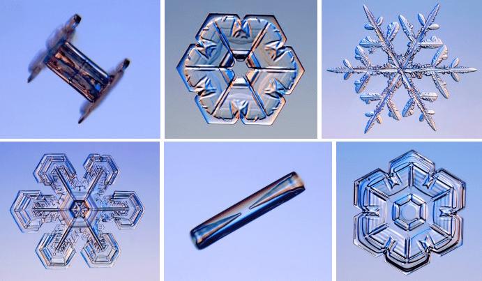 snowflake varieties