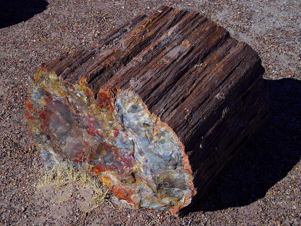 Petrified log at the Petrified Forest National Park