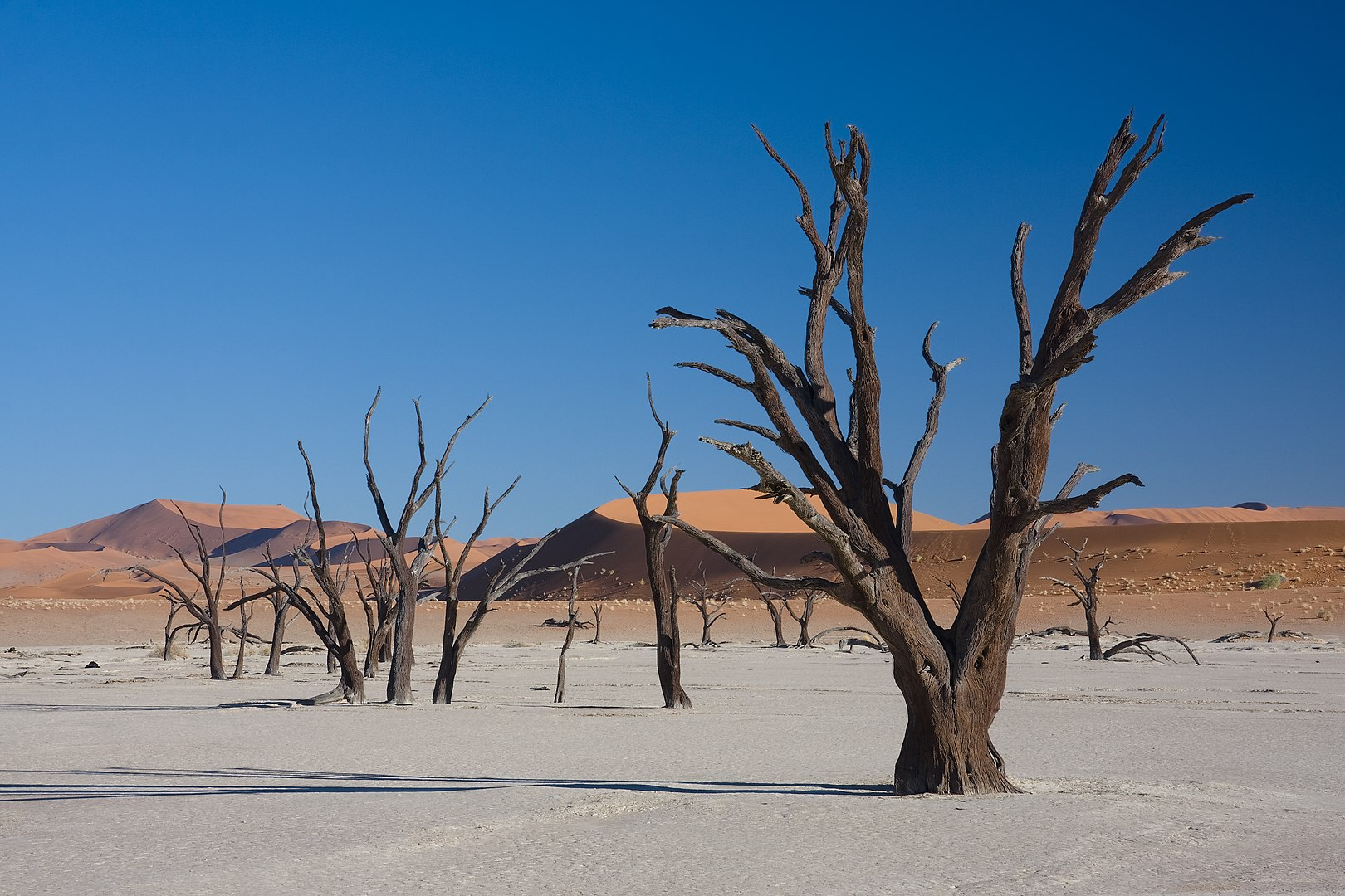 deadvlei dry trees