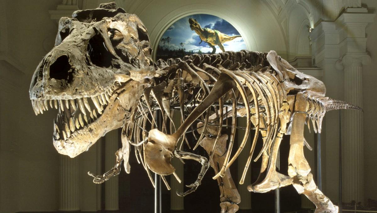 sue t-rex fossil