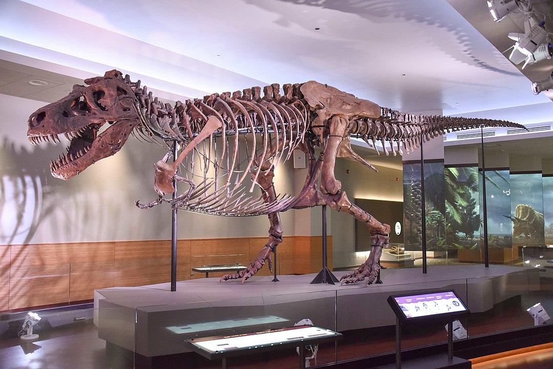 sue t-rex field museum chicago